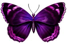 Image result for purple butterflies