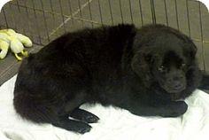 Alexis, NC - Terrier (Unknown Type, Medium) Mix. Meet Nina, a dog for adoption. http://www.adoptapet.com/pet/11495585-alexis-north-carolina-terrier-unknown-type-medium-mix