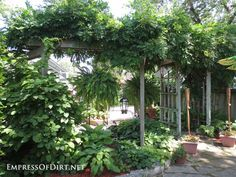20 Ways to create vertical interest in the garden with arbors, trellis, obelisks, and more. Garden Privacy, Garden Arbor, Garden Trellis, Garden Archway, Backyard Pergola, Pergola Shade, Backyard Landscaping, Metal Pergola, Obelisk