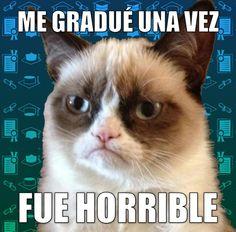 miaucoles_gato_grunon_me_gradue_una_vez_fue_horrible