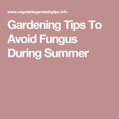 Gardening Tips To Avoid Fungus During Summer