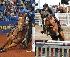 western vs english riding