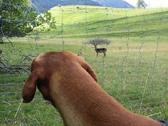 Jagdverhalten abgewöhnen? | Dog Treats, Horses, Animals, Boho Style, Training, Hunting, Life, Animales, Animaux