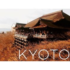 My next post is already up on Stylion, looking at all the best things to do in Kyoto! Please have a look, I'd love to know what you think! #Kyoto #thingstodo #travelblogger #japanblogger #adventure #holidays