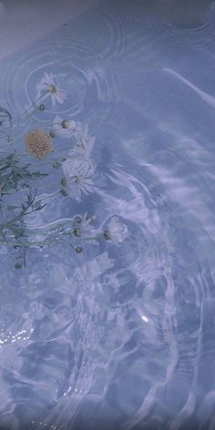 Image discovered by 𝙑𝙖𝙡𝙚𝙧𝙞𝙖𝙣. Find images and videos about blue, aesthetic and flowers on We Heart It - the app to get lost in what you love. Wallpaper Pastel, Iphone Background Wallpaper, Aesthetic Pastel Wallpaper, Blue Wallpapers, Pretty Wallpapers, Aesthetic Backgrounds, Aesthetic Wallpapers, Iphone Backgrounds, Iphone Wallpaper Water