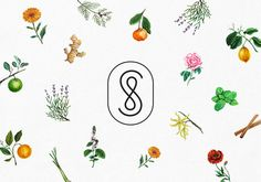 Savon Stories-02B.jpg