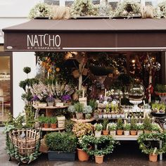 Natcho et Compagnie - a garden shop in Paris