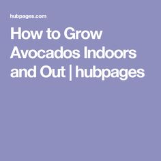 How to Grow Avocados Indoors and Out | hubpages