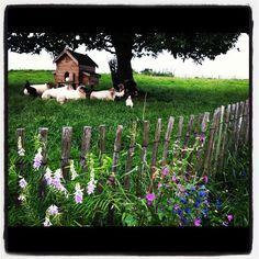 Zuid Limburg bij Bastin kwekerij in Aalbeek
