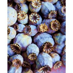 Poppy Pods in Blue ❤ liked on Polyvore featuring backgrounds, pictures, blue, photos and pics