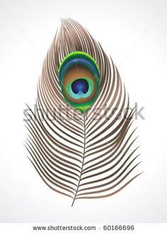 abstract peacock feather  vector illustration by sita ram, via ShutterStock