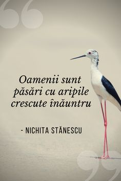 Romanian Language, Spiritual Quotes, Lorem Ipsum, Alice, Poetry, Spirituality, Inspirational, Thoughts, Learning