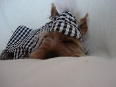 Dog jacket with matching hat houndstooth