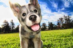 Puppy love :)    Seth Casteel, Little Friends Photo