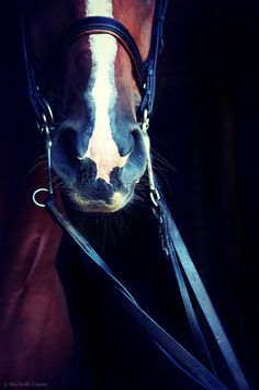 dressage reins | Flickr