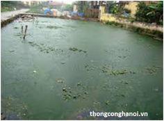 tìm hiểu hiện tượng ô nhiễm ở các sông hồ