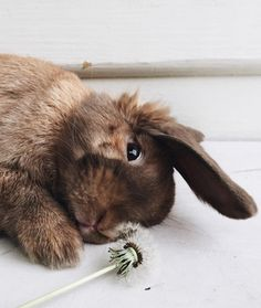 16 of the Cutest Bunnies on the Internet