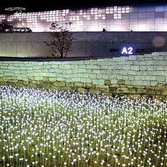 LED ROSE GARDEN@DDP SEOUL DDP의 두번째 #LED #장미 #정원 의 #컴백 #반짝 반짝 장미와, 서울의 #성곽, DDP가…
