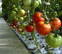 Today in Social Sciences...: Hydroponics and aeroponics