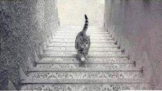 Raadsel: loopt deze kat de trap op of af? — Wel.nl