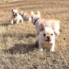 Batpig & Me Tumble It • Fun in the Sun☀️⛅️ #Frenchie #Frenchbulldog...