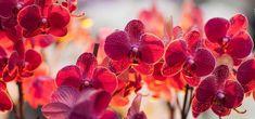 muskaan's T*I*P*S: Unlocking the Lock Join Orchid Wallpaper, Z Wallpaper, Black Mulch, Shuttle Tatting Patterns, Water Drip, Tatting Tutorial, Stock Imagery, Orchid Pot, Settings App