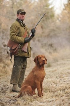 """Hungarian wirehaired vizsla © Farlap Photography (I know .. it's not a wirehaired """"per se"""")"""