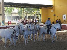 Espectáculo de caballos. Jerez de la Frontera (Cádiz)