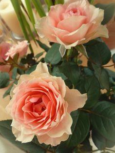N°9 Rose Vintage 4 - By Eva Larionov
