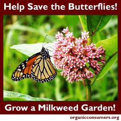 Without milkweed monarchs will continue to disappear. Please help by planting milkweed in your yard or garden this year. Learn more here: http://orgcns.org/1kGrAMq