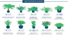 Graphic Shows the House Plants That Naturally Clean the Air in Your Home, According to a NASA Study |  Open Culture