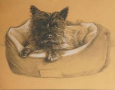 """""""Biscuit"""" 11 x 14 Charcoal on colour paper  (Cairn Terrier dog portrait,  Kathleen Melville 2013)"""