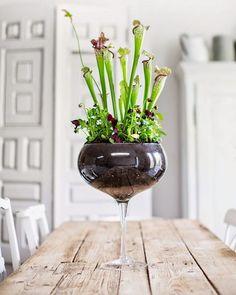 Decoración original con una copa de vino y una planta
