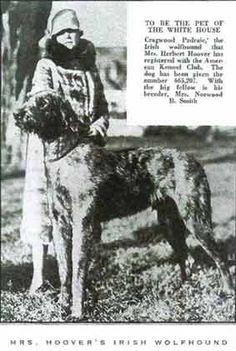 Mrs. Hoover's Irish Wolfhound