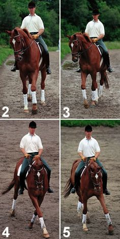 Dressage trainer Volker Brommann provides an easy introduction to the basic and useful leg yield for your horse.
