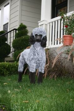 2009 Halloween, 3 of 4 - her talented groomer turns my poodle Bridgie into a sheep