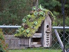Natural Birdhouses...how neat is the roof with all the moss and plants.