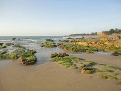 Co Thach Beach's Pristine Beauty Impresses 3 Vietnam Destinations, Vietnam Tours, Vietnam Travel, Vietnam Airlines, Travel News, Beach, Water, Outdoor, Gripe Water