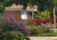 McKinney is home to a huge variety of crape myrtles and boasts the Crape Myrtle Trails and World Collection Park. Mckinney Texas, Myrtle, Trail, Park, World, Outdoor Decor, Nature, Collection, Naturaleza