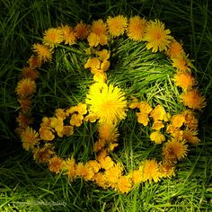 Peace & flower power