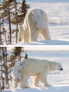 Tras ver la nieve por 1ª vez, no le gusta y trepa sobre su madre