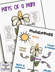 Blog post with lots of fun ideas for getting kids writing about science and teaching about the life cycle of plants.  Also includes these FREE printable anchor charts for Photosynthesis and Parts of a Plant. | Around the Kampfire