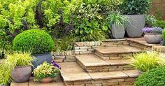 Elección de las mejores plantas de jardín para macetas y jardineras