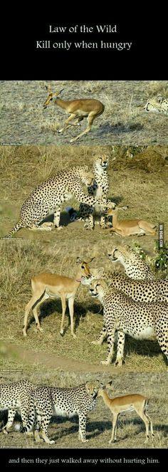 animal life on animals pinterest animal creatures and