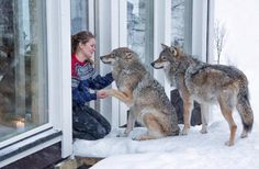 http://www.aol.com/article/2016/03/14/resort-allows-guests-to-get-up-close-and-personal-with-wolves/21327725/?utm_source=all-that-is-interesting.com&utm_medium=referral&utm_campaign=pubexchange_facebook #outdoor #knives #camping #hunting