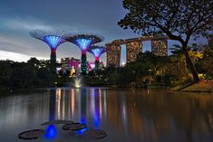 les arbres illuminés Marina Bay Sands, Building, Singapore, Asia, Travel, Buildings, Construction