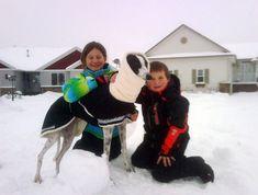 rescued greyhound in cute dog coat!