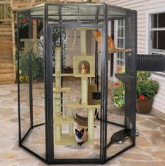 safe outside play area for cats