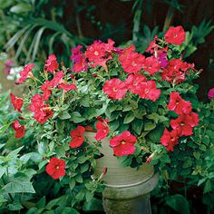 Petunias - 101 Container Gardening Ideas | Southern Living