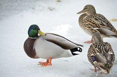 Winter Photos, Bird, Animals, Winter Pictures, Animales, Animaux, Birds, Animal Memes, Animal